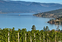 Visit a few of our local Wineries